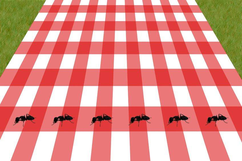 Don't Let Ants Ruin Your Picnic